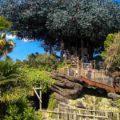 Swiss Family Robinsons Treehouse
