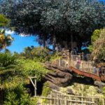 Swiss Family Robinsons Treehouse